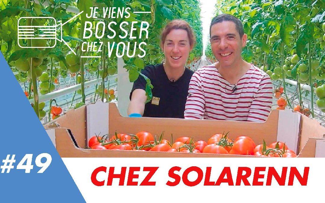 J'ai testé le job de cueilleur de tomates chez Solarenn, coopérative bretonne qui recrute !