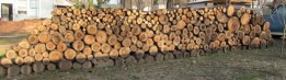 Limb wood pile from 100 year old Walnut tree stacked up