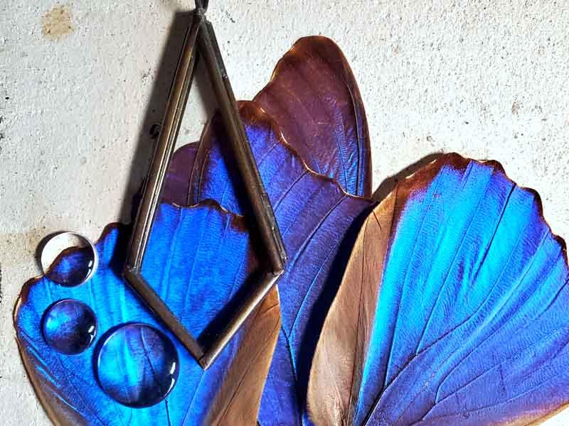 モルフォ蝶の翅