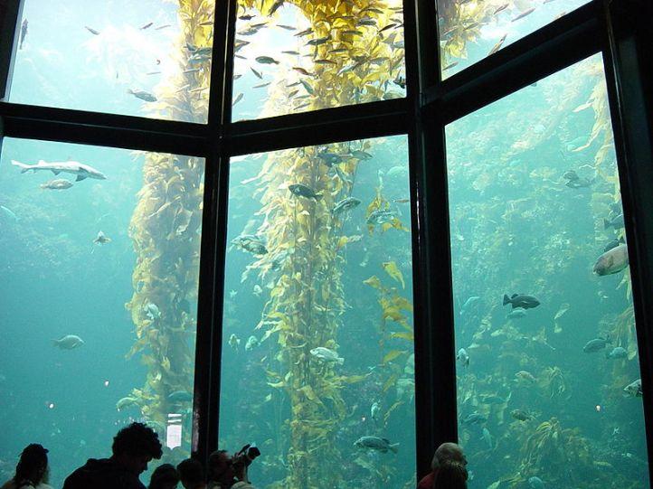 Kelp Aquarium