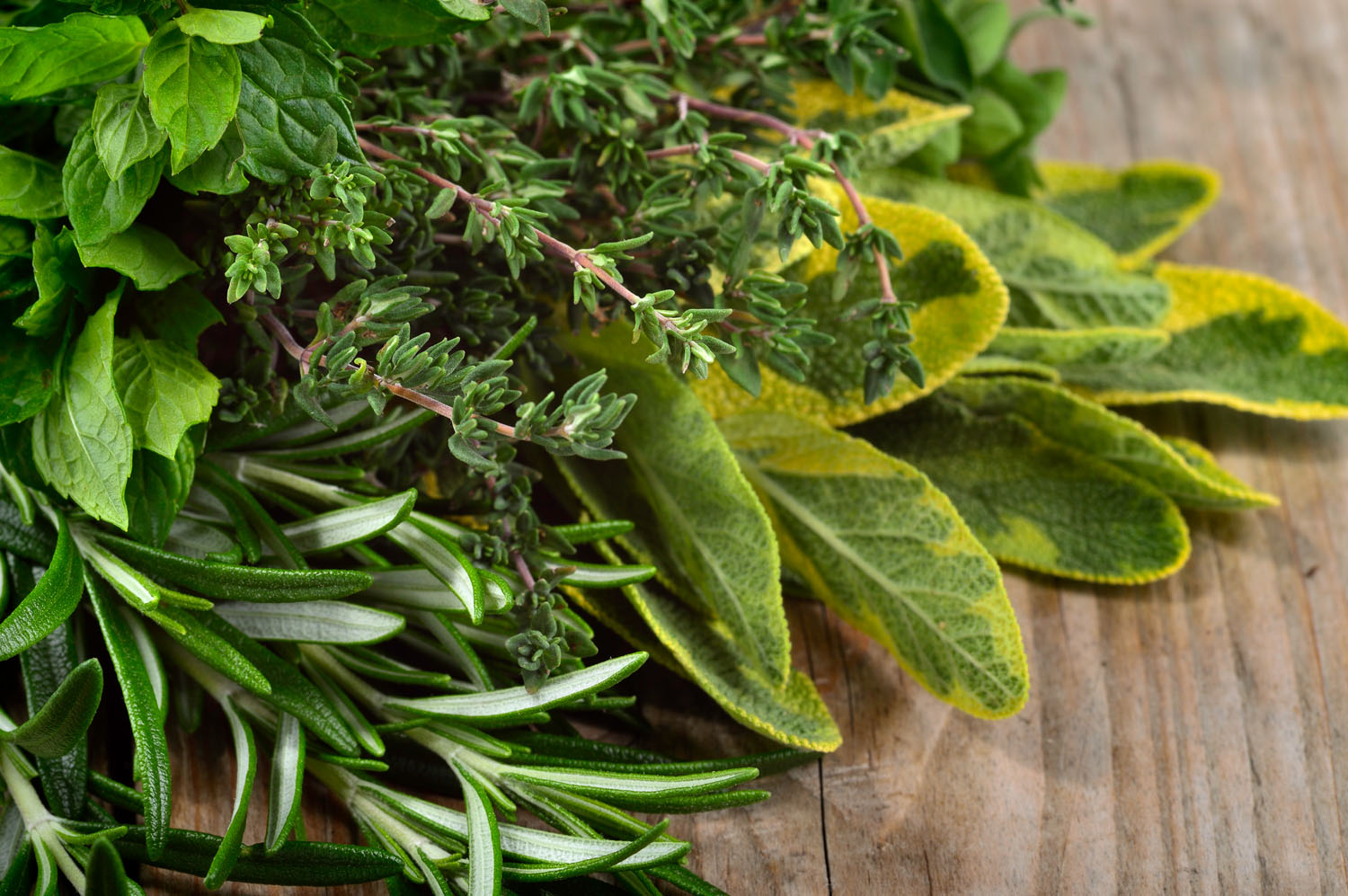 How To Make A Fresh Herb Wreath For Passover Jewish Journal