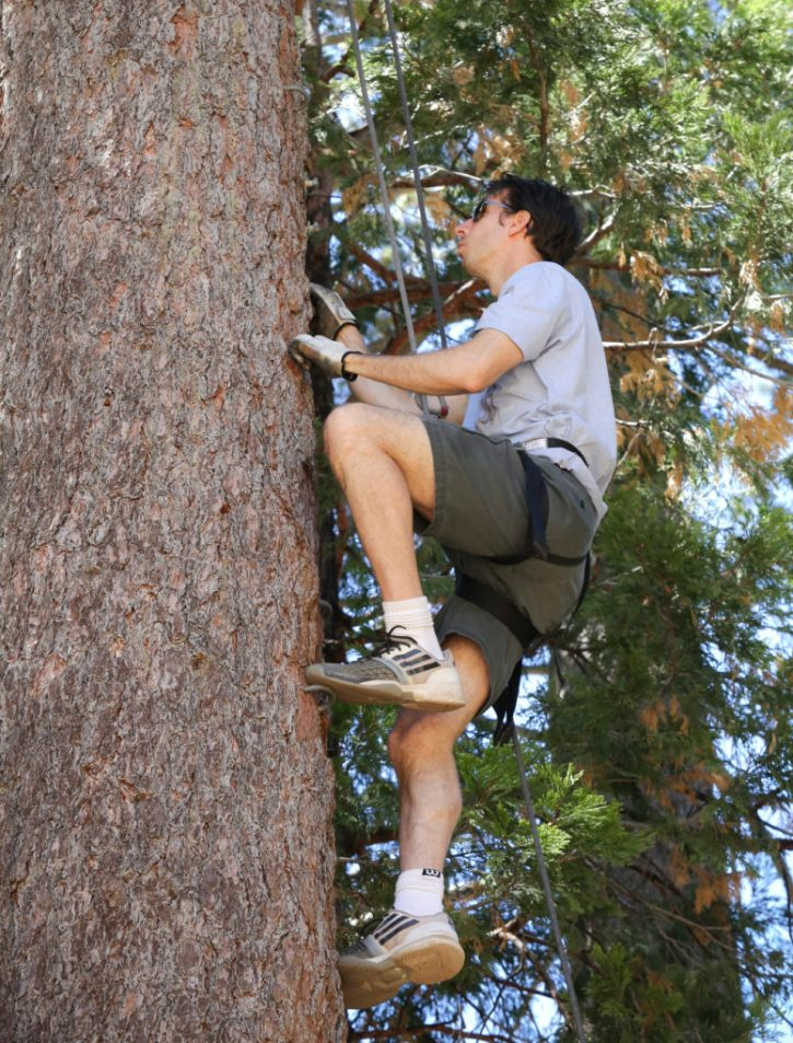 climbing tall tree on way to trust fall