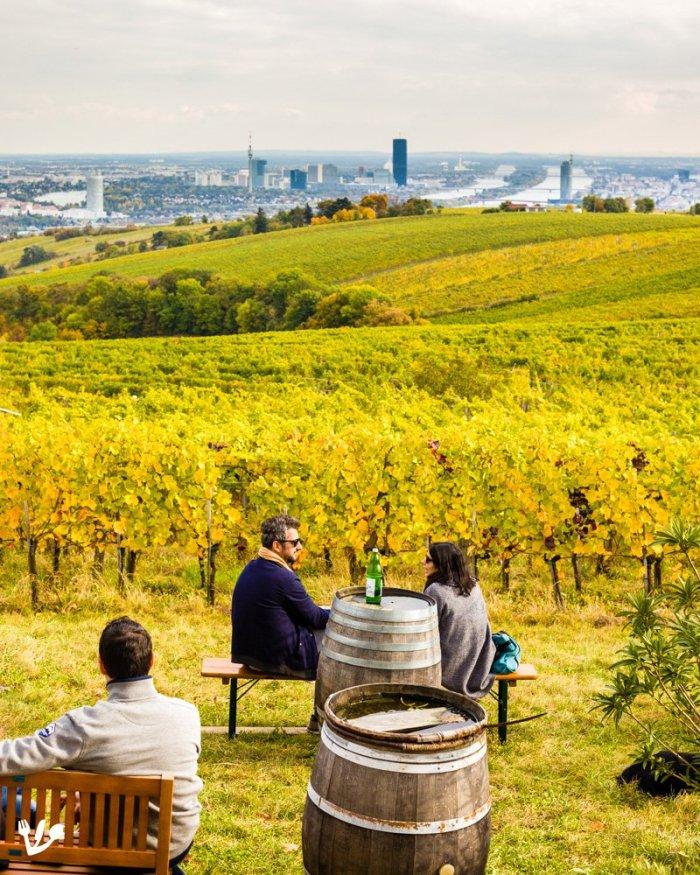 Vienna Woods Vineyard Heuriger with Scenic View (Reclaiming Heimat) #Kahlenberg