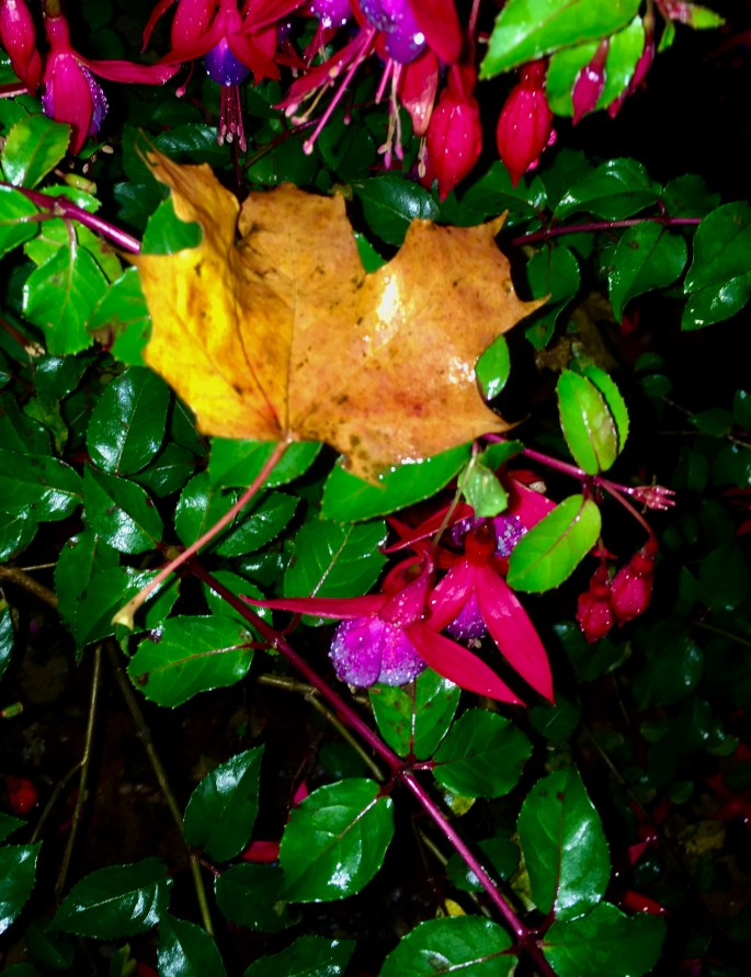 Fuchsia & Autumn Leaf by Jez Braithwaite