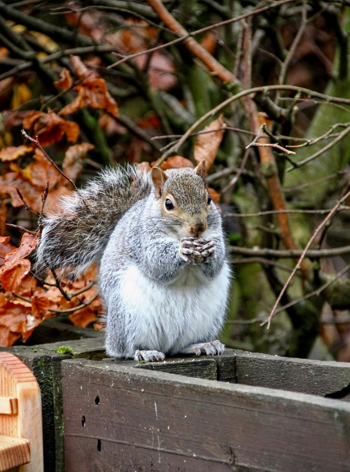 Squirrel eating by Jez Braithwaite
