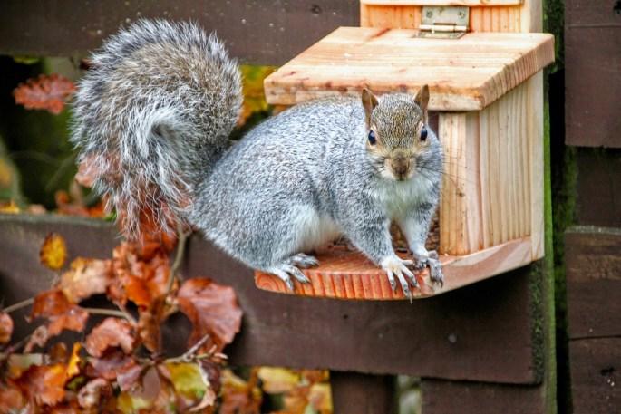 Squirrel by Jez Braithwaite
