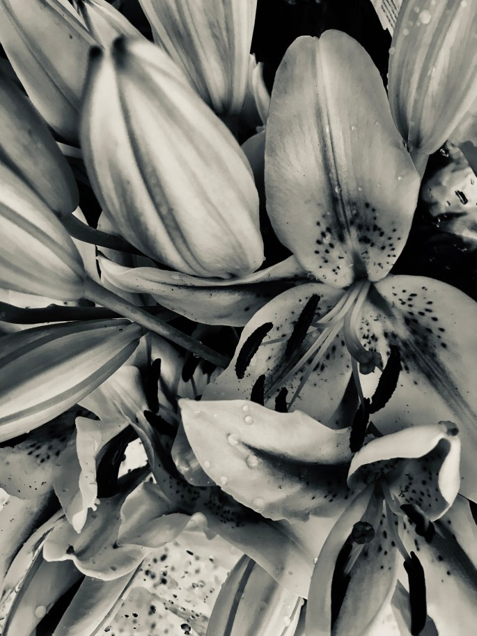 White lily in silvertone