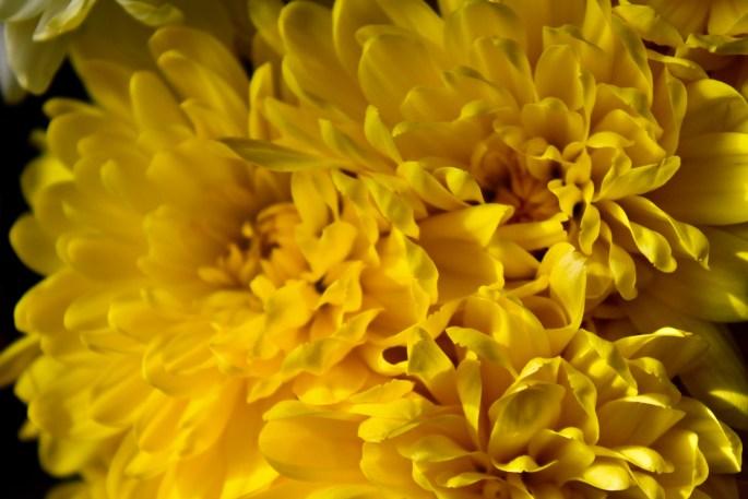 A mass of yellow