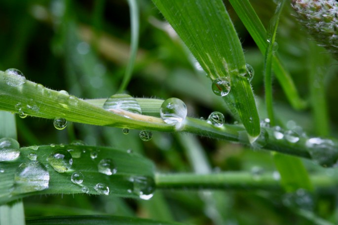 Macro water droplets
