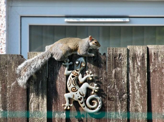 Skwurrel sunbathing