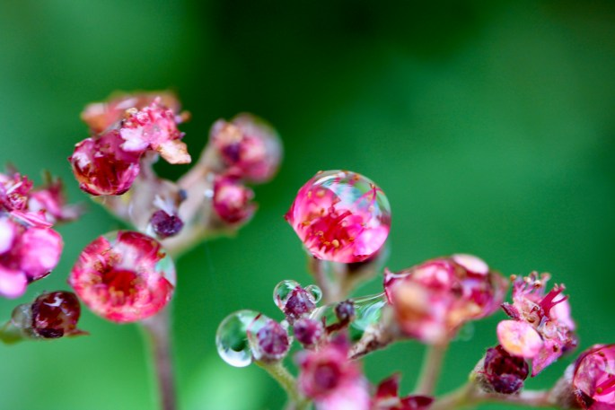 Encapsulated flower heads
