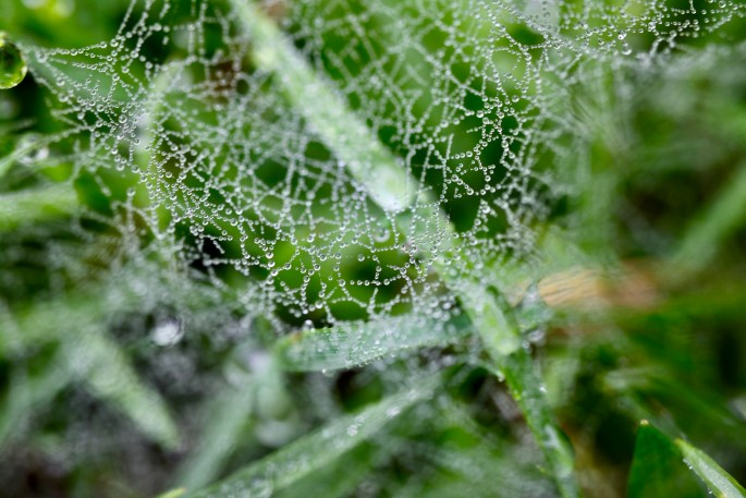 Raindrops on a web