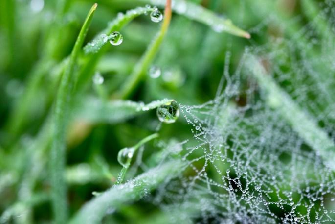 Raindrops on a wab
