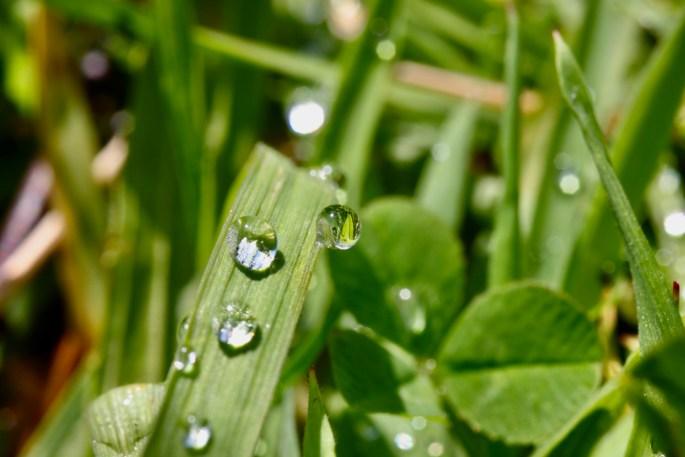 Lensball raindrop