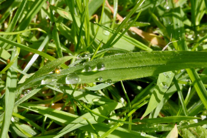 Raindrops on blade of grass