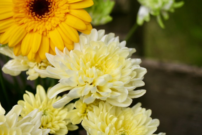 Pale yellow chrysanths