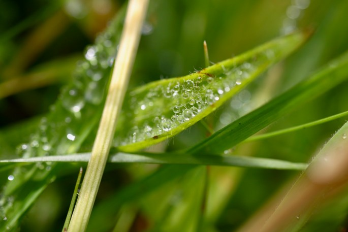 Raindrops on a blade of grass