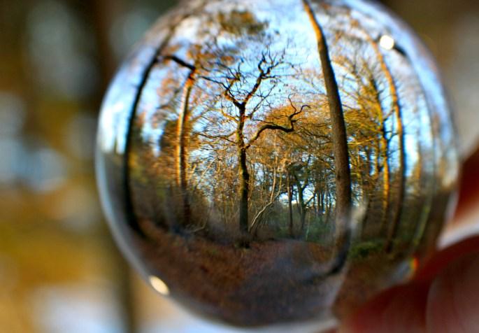 Sunlit trees through a lensball