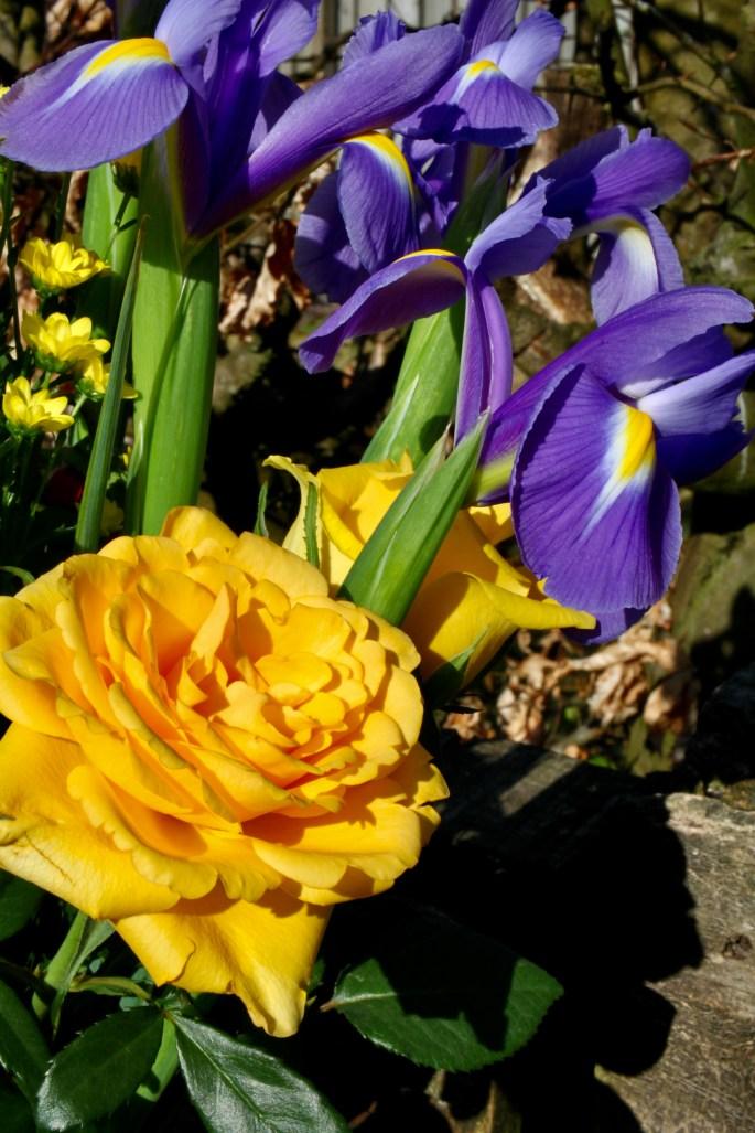 Yellow rose & irises