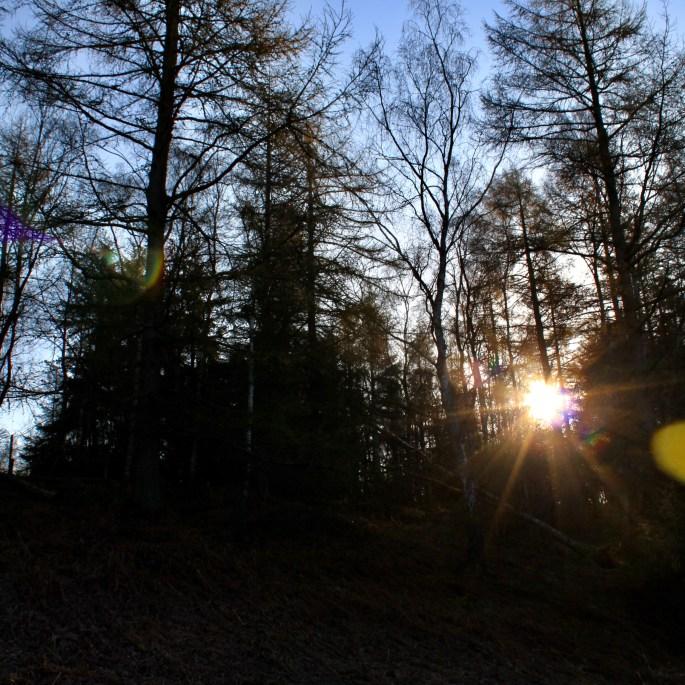 Sunlight bursting through the trees