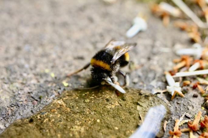 Weary bee