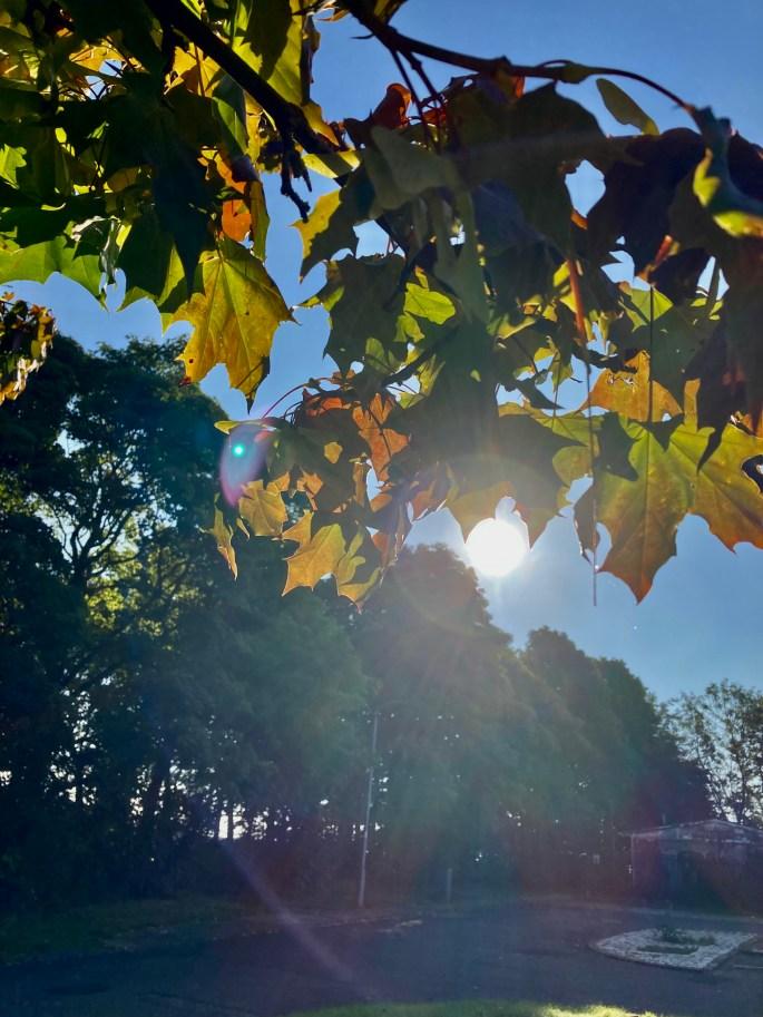 Sun through the leafs