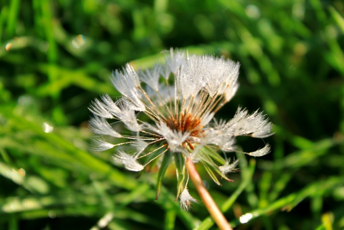 Dew soaked wish