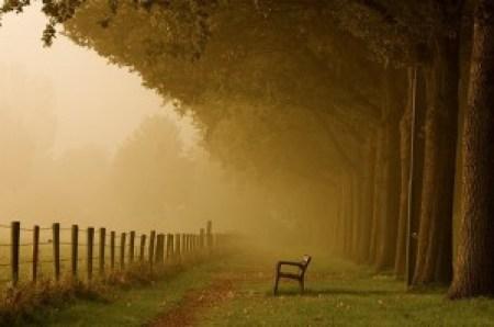 Take a seat and enjoy Autumn!