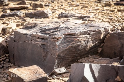 ANR SeqStrat-Ice Morocco fieldwork 2014: Hummocky cross stratification (upper ordovician)