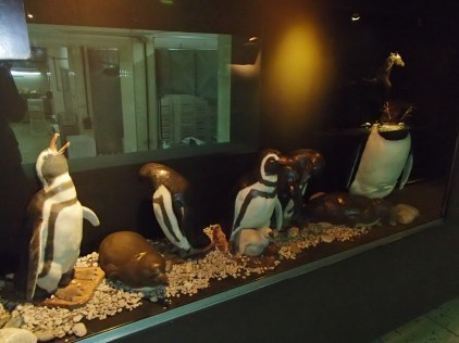 and penguins