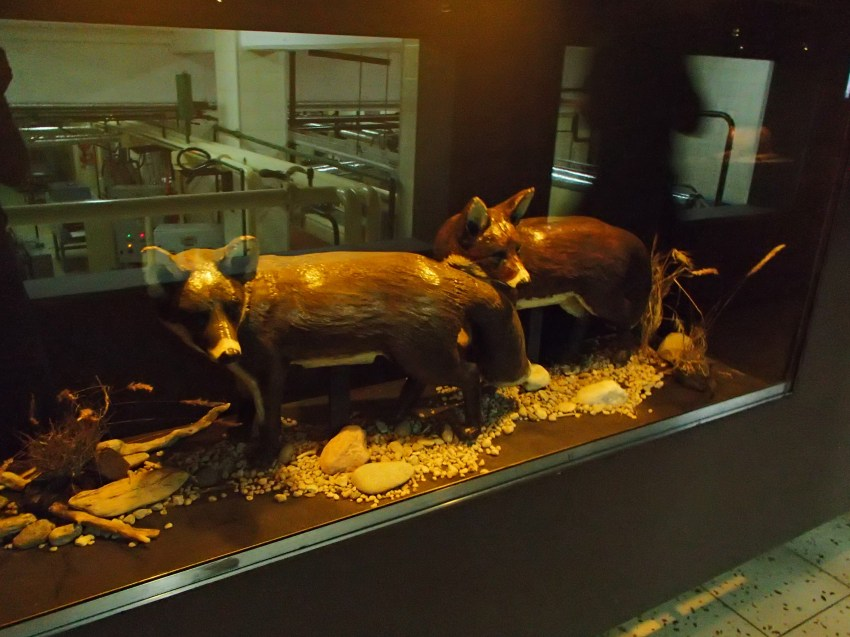 These are life sized chocolate foxes