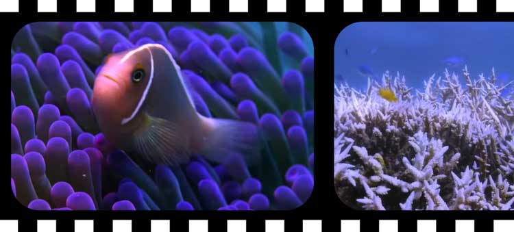 Documentaire Netflix : Chasing Coral