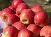 Possui flavonoides e antioxidantes que ajudam no processo de desintoxicação do organismo.
