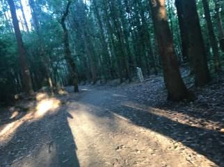 El 30% de El Camino transcurre en zonas boscosas, sobre todo en la Galicia. Ahí también se llega.
