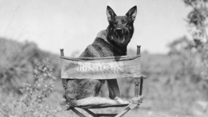 /home/tribu/public html/wp content/uploads/sites/14/2016/01/rin tin tin warnerbros