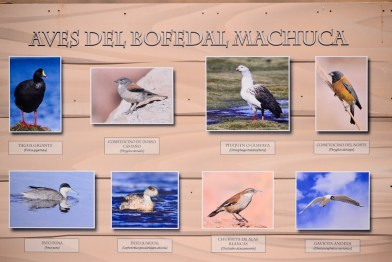 Aves del Bofedal Machuca
