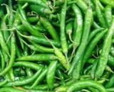 Hari mirch (Green chilli)