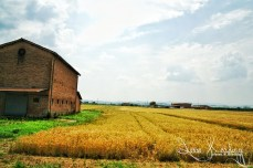 Italian Country Side