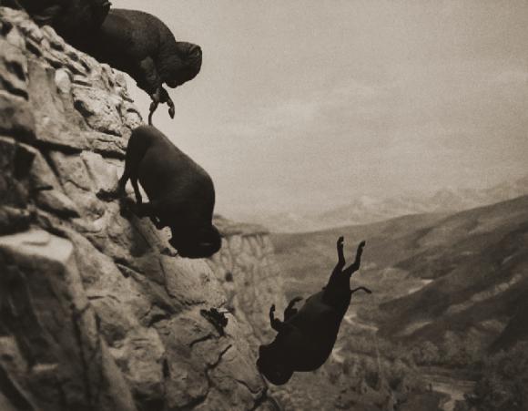 Wojnarowicz Untitled (Buffaloes) 1994