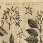Quandaries of Quinine