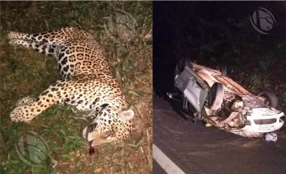 Família de Ariquemes fica ferida após atropelar onça em rodovia e recebe atendimento em hospital de Vilhena