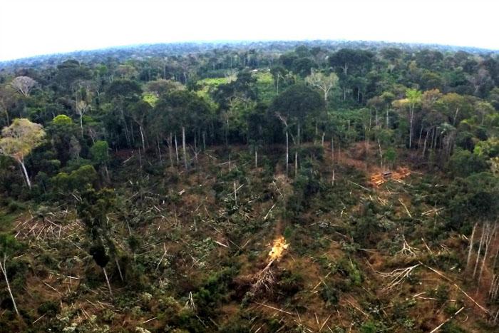 Desmatamento na Amazônia cresce 13,7% e atinge pior marca em dez anos