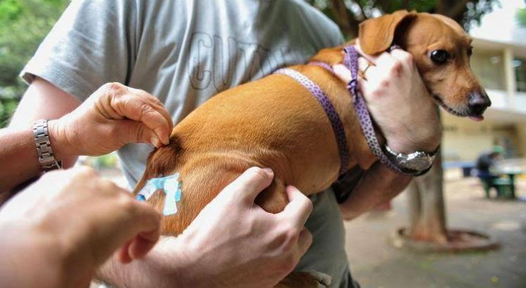 Vacinação animal acontece neste sábado (17); confira locais