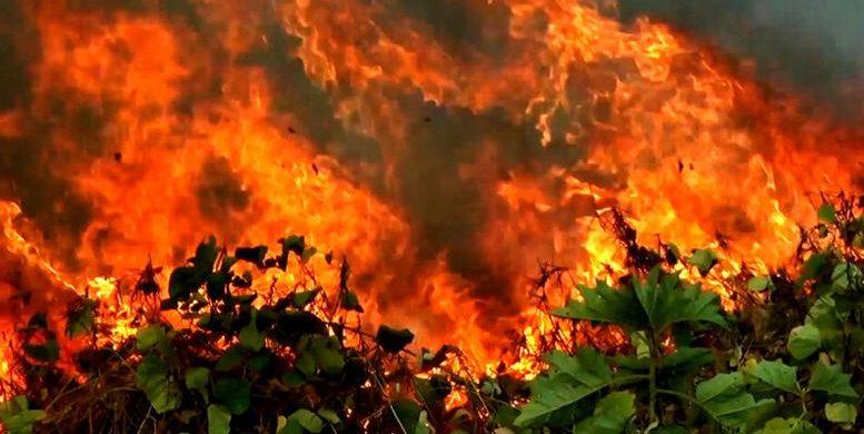 Rondônia e mais três estados pedem ajuda das Forças Armadas para combate a incêndios