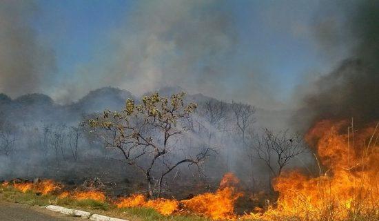 Após queimadas, MPF recomenda Concurso Público para o Ibama