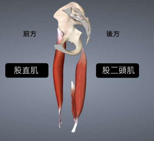 骨盆2.jpg