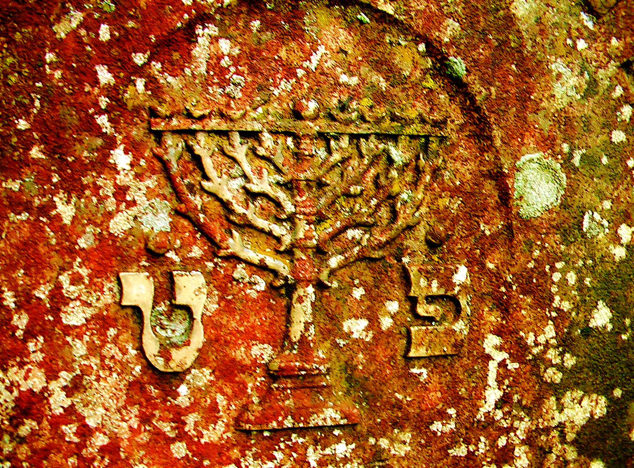Huerben grave marker detail with 9 branch Chanuckia