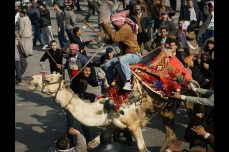 A supporter of embattled Egyptian President Hosni Mubarak rides a camel through the melee during a clash between pro-Mubarak and anti-government protesters in Tahrir Square in Cairo on Feb. 2, 2011. Chris Hondros/Getty Images