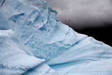 Iceberg Detail with Glaucous Gulls, East Greenland, August 24, 2006