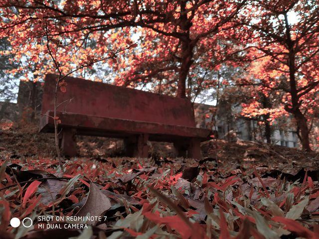 স্থানঃ আমানত হল পেছন, চট্টগ্রাম বিশ্ববিদ্যালয়। ছবি কৃতজ্ঞতাঃ অমিত কান্তি সরকার, নৃবিজ্ঞান বিভাগ, চবি